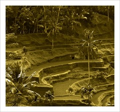 Bali - desa Ubud (Franc Le Blanc) Tags: travel bali sepia indonesia landscape asia fabulous ricefield ubud sawah smrgsbord anawesomeshot excellentphotographerawards beautifulbali exceptionallybeautifulbaligallery