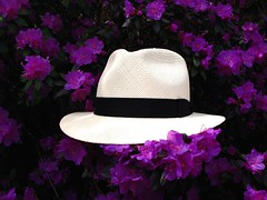 Le Panama (Pierre thier) Tags: jardinbotanique blueribbonwinner greatphotographers supershot ysplix colourartaward floweria bestshotaward salveanatureza lenscraft