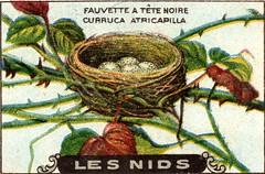 les nids 8