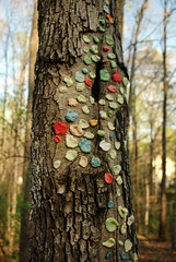 Gum tree folk art