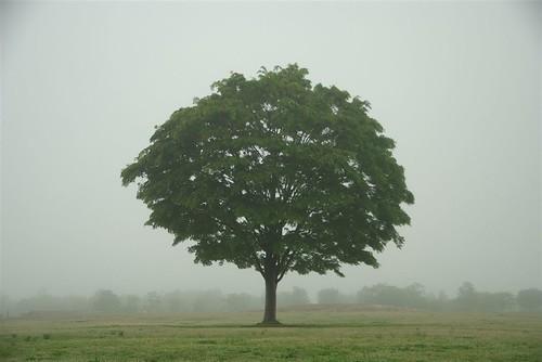 200805250049木