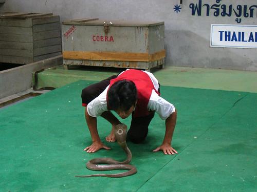 samui snake farm-サムイスネークファーム0002