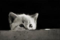 lluna o roma? amor o an ull? (Ferran.) Tags: cats roma cat gat lluna gats definitivamentroma silaromasmsmaca srapicafluixaperutilitzacanalsdecomunicaciquenoestanpreparatsperaaix sivoldiralgunacosaagrairqueutilitzielscanalshabitualsgracies