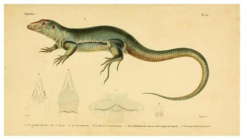 013-Erpétologie générale ou Histoire naturelle complète des reptiles 1834