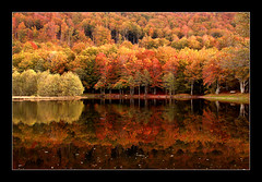 Lac des Picades (platane31) Tags: autumn lake reflection fall forest automne pentax lac frame reflexions reflets fort aveyron aubrac eow supershot encadr 25faves htres treesubject leplatane excellentphotographerawards thegoldenmermaid k100dsuper thegardenofzen brameloup lacdespicades htraie