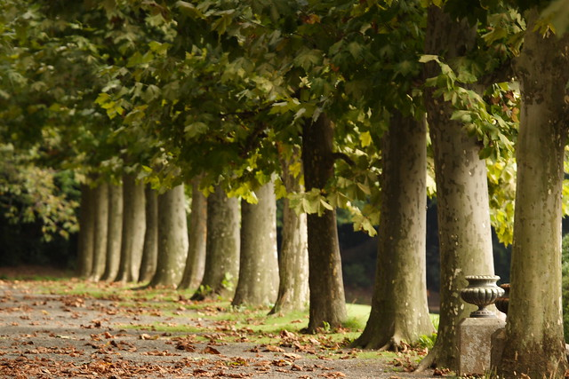 落葉前の並木