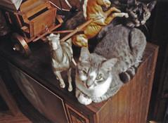 StinkyHorses 0004wf (lucycat) Tags: cats 1992 stinky modelhorses