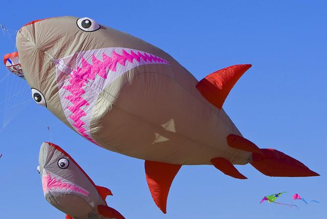 cerf-volant requins