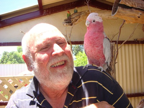 Ian with his jealous pink galah Molly...