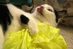 Yummy tissue paper