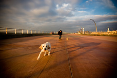 Sally, Sally, pride of our alley (bitrot) Tags: uk sunset england sky dog dogs yorkie clouds goldenretriever freedom shadows action sigma wideangle retriever lancashire sally terrier derek prom promenade handheld 1020mm yorkshireterrier vignette blackpool suzie sigma1020mm 10mm fivestarsgallery