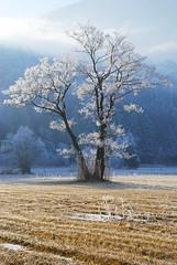 Frastanzer Ried (gregor H) Tags: trees winter landscape austria bravo themoulinrouge vorarlberg ried frastanz golddragon diamondclassphotographer frastanzerried