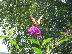 DSCN1135 (alle_alleb) Tags: flowers summer dogs butterflies indiana fields trips