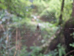 Spider (Steve Southerland) Tags: india spider kerala wyanad stevesoutherland ringvenroel