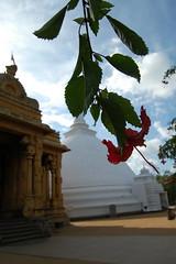 sri lankan viharas (anujaac) Tags: temple kalaniya
