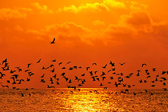 leaving... (muha...) Tags: life sunset party orange love true birds silhouette leaving sad january mongolia maldives sandbank muha nikonstunninggallery goldenphotographer muhaphotoscom diamondclassphotographer nikond300