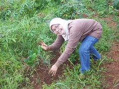 wakaf3 (ummu alia) Tags: pohon wakaf