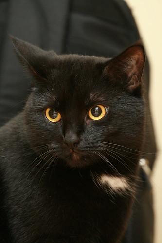 Black cat on black bag background
