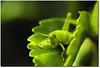 E quem não tem... (.Tatiana.) Tags: friends macro verde green closeup grilo filtro bragançapaulista johanes fotoclube duetos nacasadamami ysplix johanesduarte closeup42 siteparavendadefotos httpwwwplanobfotodesigncom fototatianasapateiro