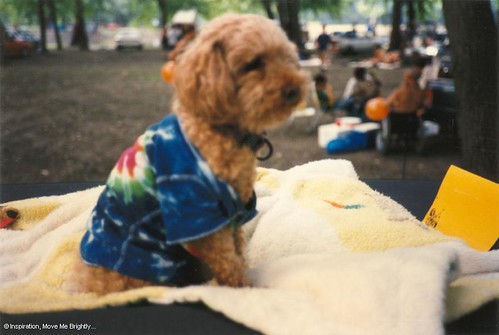 Grateful Dead Summer Tour 1995, 7/7/95 a.k.a. 7-7-95 - Springfield, Illinois - wearing a tie-dye t-shirt, cool little Dead Dog on a VW Bus