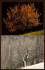 autunno/inverno - autumn/winter (Zinco.Foto) Tags: autumn winter inverno autunno fanano diapo zinco nikond80 appenninosettentrionalealpinatura squizza 2stagioni