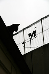 Cyble sur le toit, vision n2 (Calinore) Tags: street city roof pet paris france windmill silhouette cat la chat noir montmartre collection explore gato soir iledefrance blanc ville felin girouette eolienne animaldecompagnie top150 bestofcats animaldomestique gtest unamourdechat selectionneespargetty
