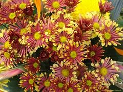 DSC03903 (Fernando Reyes Palencia) Tags: flores paisajesdeguatemala bellospaisajesdeguatemala guatemalalandscapes fotosfernandoreyes imagenesdeguatemala postalesdeguatemala
