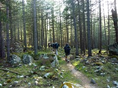 Sur le sentier du Tavignanu en RD : la forêt de Crespa