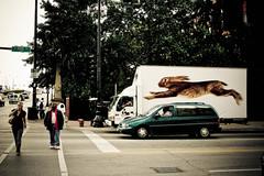 Bunny (Paul Octavious) Tags: chicago bunny truck for needed random but mycamera
