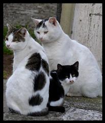 Cats Composition (Sabrina Campagna) Tags: white black animal loving composition cat lumix kitten feline soft sweet kitty panasonic kitties felino 50 gatto pussycat fz tender dmc micio fz50 catlike micino