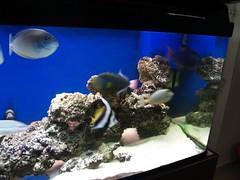 P9303437 (shayoctave) Tags: sea fish tan shay