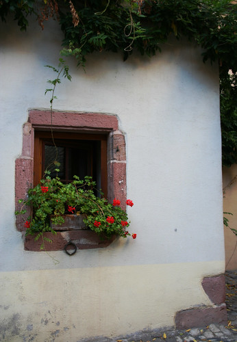 Windows in Alsace -6