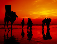 Red ocean (Iqbal.Khatri) Tags: ocean pakistan sunset red sea horse beach public water silhouette yellow canon camel karachi clifton sindh myfave seaview 400d aplusphoto iqbalkhatri