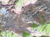 Carte du massif du Monte Ritondu (Rotondo) avec accès par la vallée du Verghjellu (Verghiello)