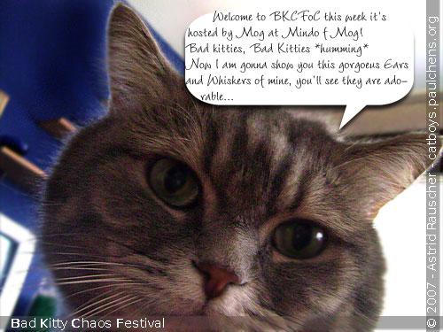 Bad Kitty Cat Festival Of Chaos No.20 - 01