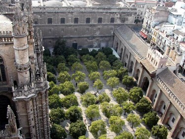 Patio de naranjos