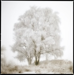 winter frost (anders mrtsell) Tags: winter bw white snow tree square frost rebro themoulinrouge naturesfinest supershot golddragon abigfave anawesomeshot aplusphoto diamondclassphotographer flickrdiamond theperfectphotographer thegardenofzen marvelousphotoaward storamellsa