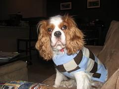 rydersweater.jpg