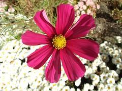 Flowers, Notre Dame de la Garde