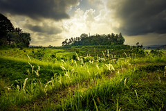 Tirtagangga - Bali (Auré from Paris) Tags: travel bali nature water clouds indonesia landscape bravo asia rice hill culture fields asie ricefields dri indonesie paddyfields canoneos5d tirtagangga auré visiongroup excellentphotographerawards terrases betterthangood vision100