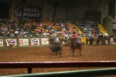Fort Worth rodeo