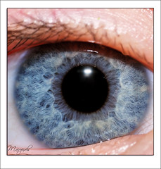 biometrics (Haentjens Raphal - Macropixels) Tags: iris macro eye beautiful closeup canon wow ojo eos eyes magic best yeux bleu stunning excellent olho ogen magical auge occhio ochi biometrics raphal macrophotography macrography  ga pupille  macrophotographie stuning biomtrie  macrographie  colorphotoaward aplusphoto diamondclassphotographer haentjens macropixels beautyupclose  flickrcontestcity canonmpe65mmf2815xsupermacro lightiq