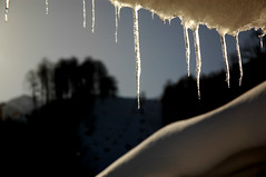 { icicle } (lartdeco) Tags: winter mountain snow icicle thaw