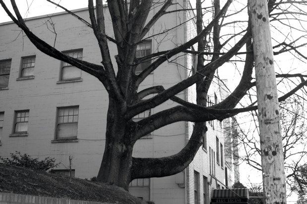 tree_black_white_everett_enhanced