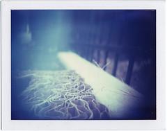 (Adamwithoutanyhands) Tags: camera color film polaroid diy holga lightleak diana frankenstein holgaroid expired closeuplens dianalens typeiduv roidweek08 batchofdiscardedcardboardoutback