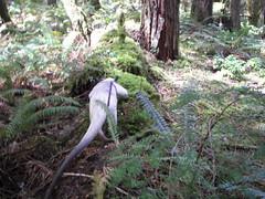 Along a log