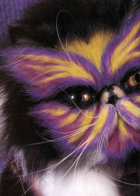painted cats (4)