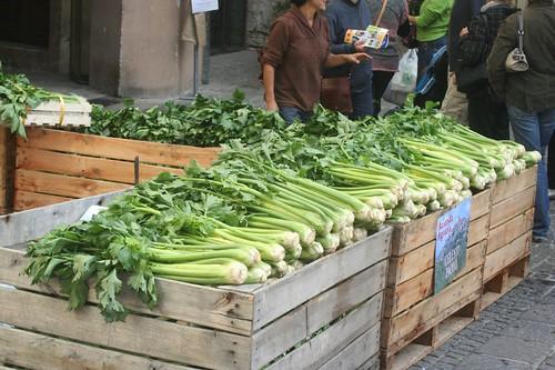 Black Celery of Trevi