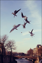 Battle in the sky (iN Paris) (manlio_k) Tags: sky seagulls paris vintage river bread battle moment senna gabbiani manlio decisivemoment castagna manliocastagna manliok