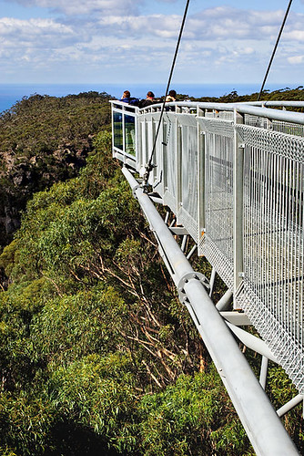 Illawarra Fly Tree Top Walk, Knights Hill, New South Wales, Australia IMG_4524_Illawarra_Fly